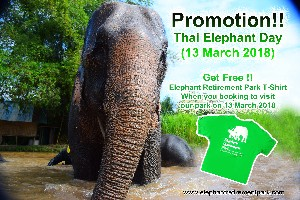 Promotion!! Thai National Elephant Day (13 March 2018 )