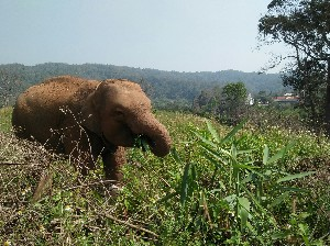 National Elephant Day (Thailand) 13 March