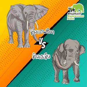 Difference Between African Elephant and Asia Elephant
