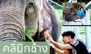 โครงการ สร้างคลินิกเพื่อดูแลช้างที่ถูกทารุณ โดยมูลนิธิอนุรักษ์ช้างเอเชีย จ.เชียงใหม่