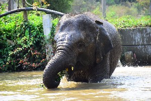 How much do u know about elephant'trunk?