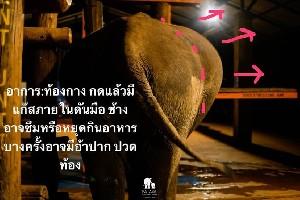 ช้างท้องอืดได้ยังไงกันนะ