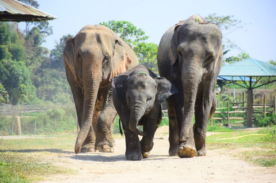 One Day Elephant Care Program