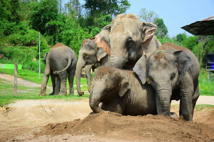 Half Day Elephant Care program (Morning)