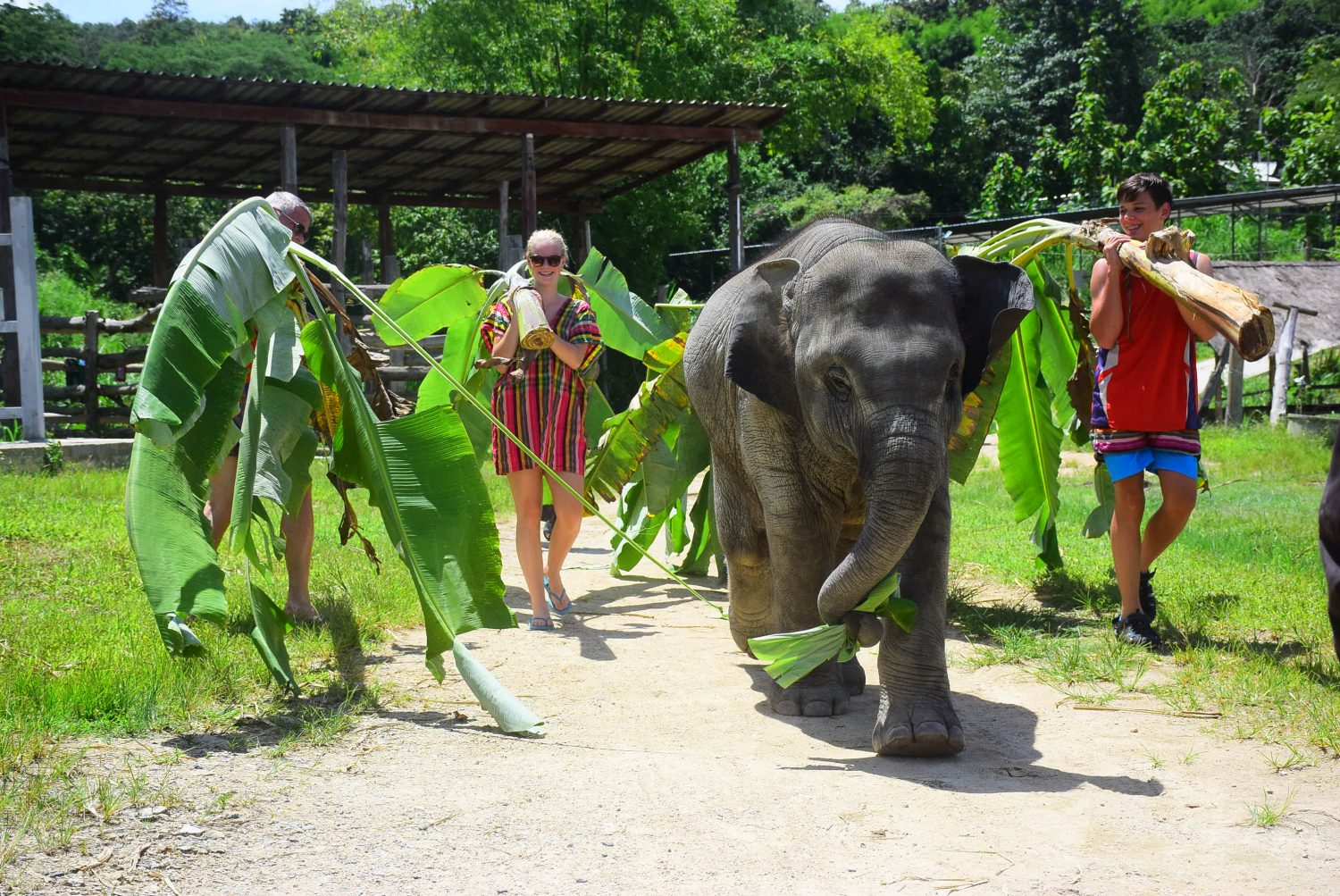 The best Elephant Sanctuary in Chiang Mai